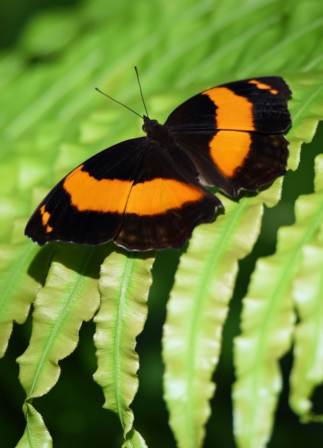 Butterfly World, Kuranda, Australia. Photo: David Clode,