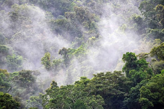Water vapour produced by evapotranspiration rises above a rain forest, adding to or forming clouds above, which in turn may produce rain. The forest also produces nuclei so that rain more rain may fall, in a cycle resulting in more eveapotranspiration, more forest growth, more nuclei, and so on. Photo: Mt. Whitfield national Park, Cairns, Australia, David Clode.