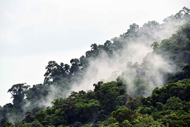 Water vapour rising from a rain forest. Mt Whitfield. Photo: David Clode.