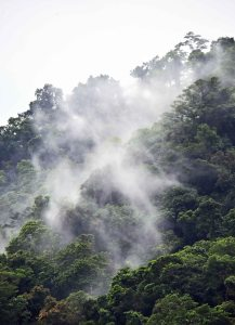 Water vapour resulting from evapotranspiration rises from a rain forest to form low level clouds. Mt Whitfield. Photo: David Clode.
