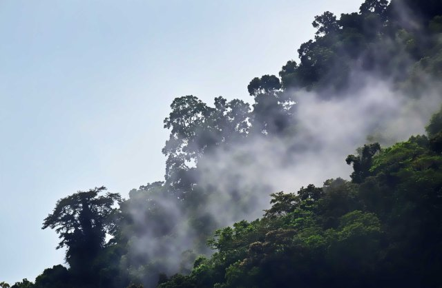Misty rain forest. Photo: David Clode.