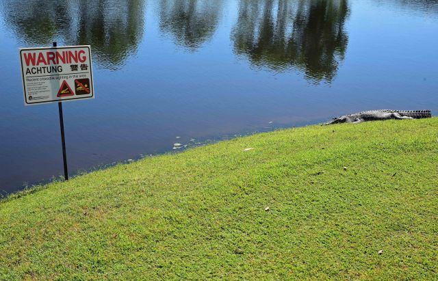 Crocodile warning sign complete with crocodile. Half Moon bay golf course, Yorkeys, Cairns, Australia. Photo: David Clode.