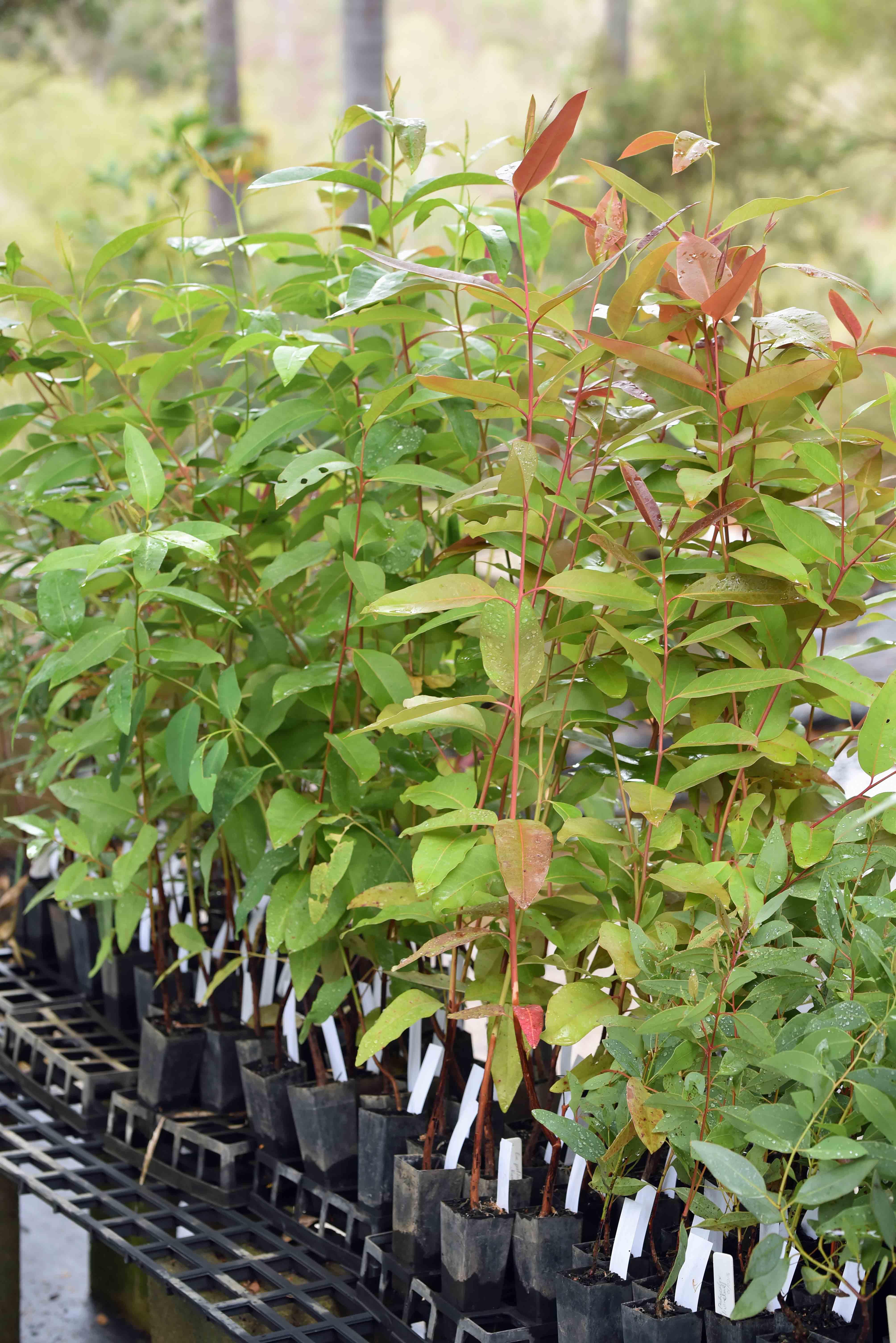 Reforestation Methods Reforestation Projects