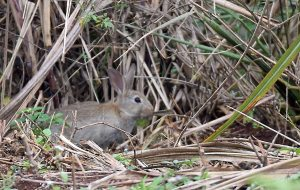 Rabbits and other animals can eat and destroy new plantings unless they are protected.