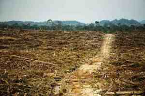 Palm oil deforestation. Rainforest Action Network