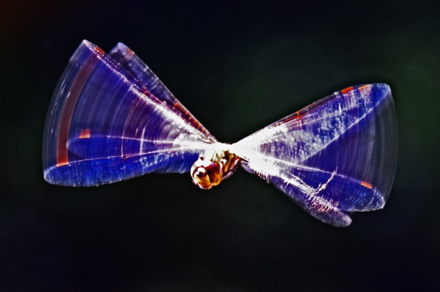 Artistic photo of a flying dragonfly. Photo: David Clode.