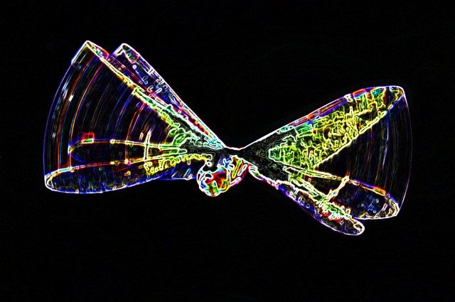 Neon Dragonfly. Photo: David Clode.