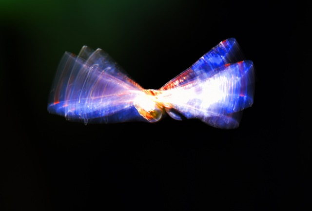 Dragonfly in flight. Cairns. Photo: David Clode.