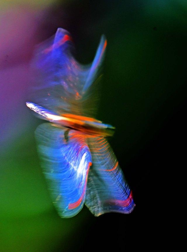 Manipulated dragonfly photo. David Clode.