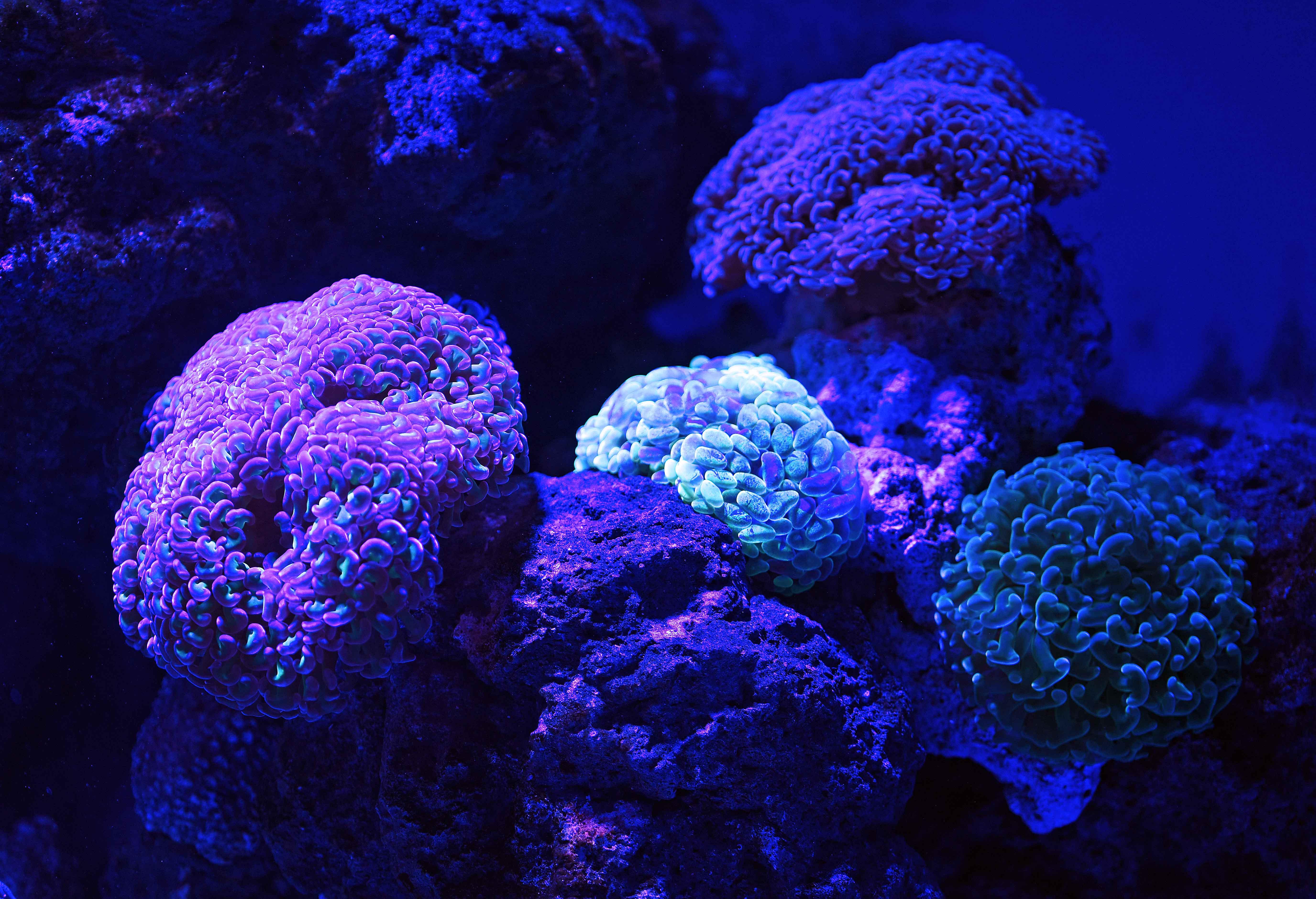 Artificial reefs - Bioluminescent aquarium ...