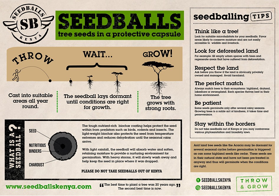 Seedballs for Reforestation   Reforestation me